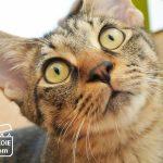 はてなブログで1000記事目、猫の写真でつづります。