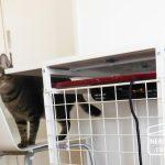 DIY*猫とこたつと手づくりケージ、3年間の記録。
