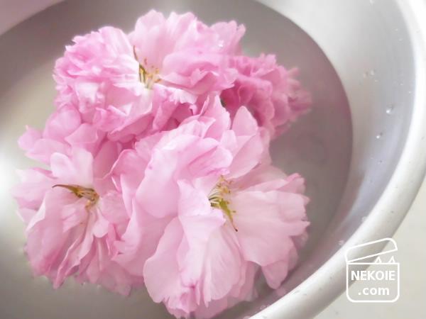 女子力チャージと、初めての桜しごと。