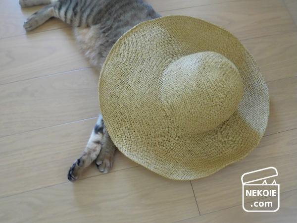 夏、5年目の麦わら帽子でナチュラルスタイル。