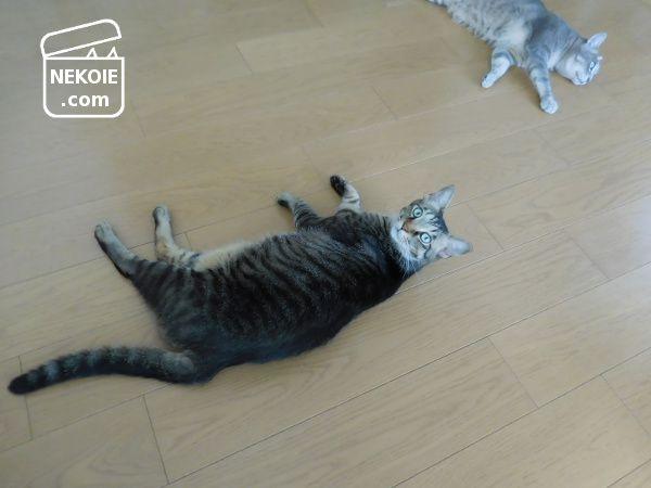 猫と暮らす家で、床掃除の前にすること。