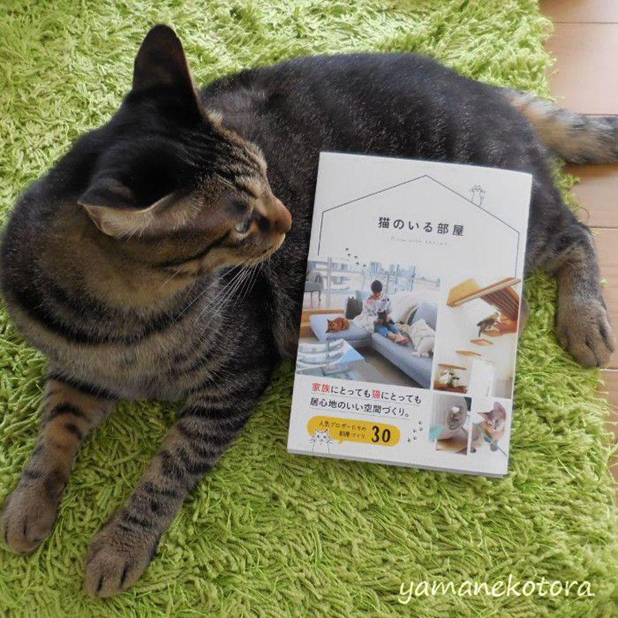 書籍掲載のお知らせ*「猫のいる部屋」