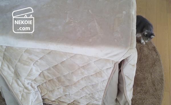 ニトリ* 「洗濯できるこたつ布団」を買いました。