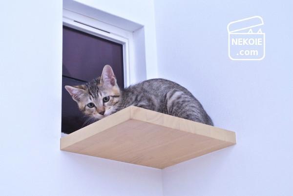 猫の日*日産の特設サイト掲載のお知らせ
