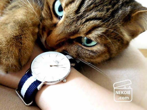 普段使い希望、ダニエル・ウェリントンの腕時計。