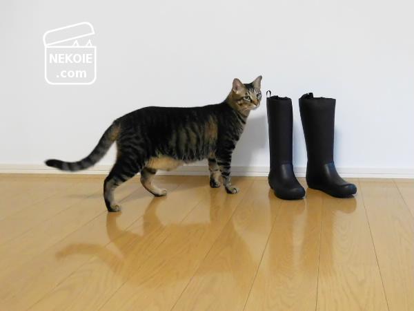 クロックス、軽量コンパクトな新しい長靴。