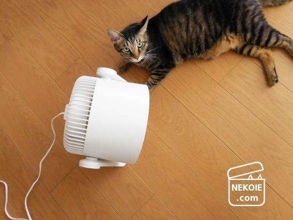安心な虫よけになる扇風機と、コードの整頓グッズ。