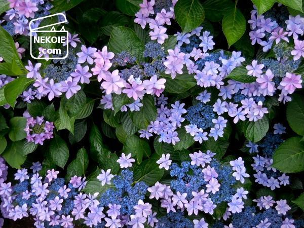 夏の訪れ、冬の備え、今の私の庭コーデ