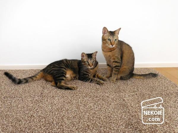 猫と暮らすリビングに、今夏はラグを敷こうと決めた。