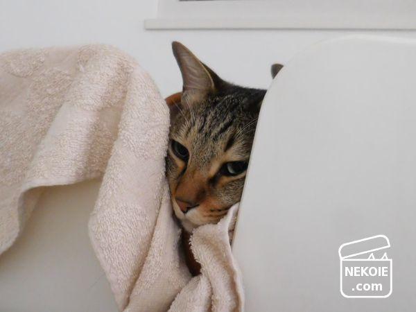 家具を多用途に、猫まわりの冬じたく。