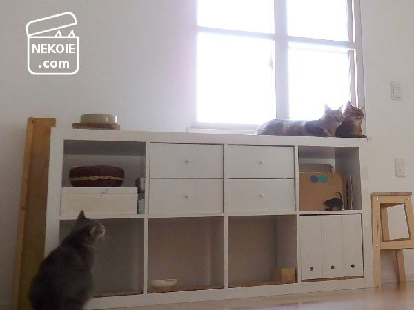5年目のIKEA家具と、猫専用ミニマルーム。