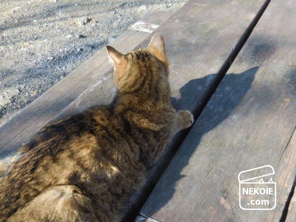 タブーの掃除と、ネコ同伴の初詣。