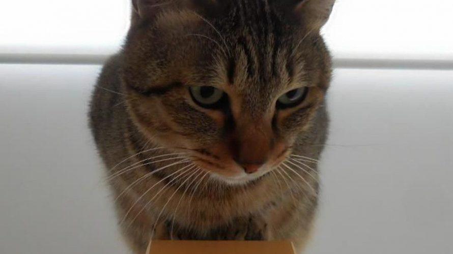 猫から、カメラ目線をいただく工夫。