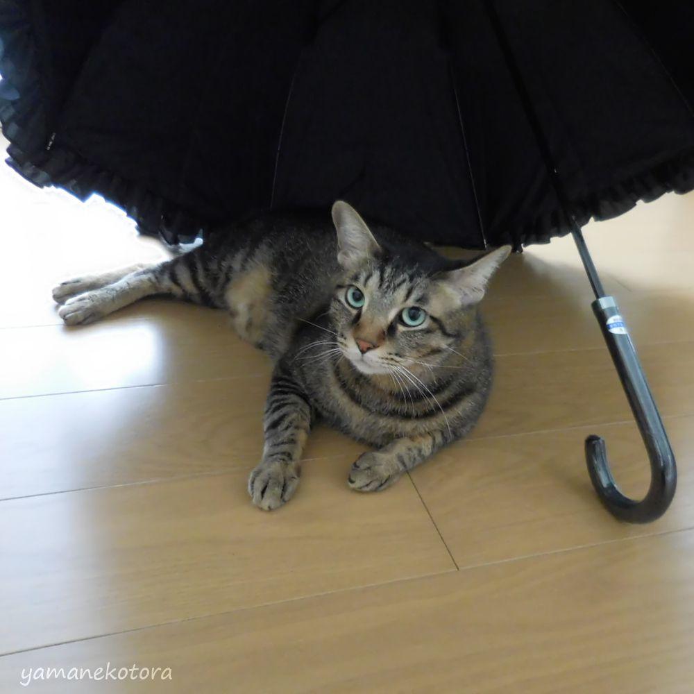 晴雨兼用の傘、3年目のクラシコ。