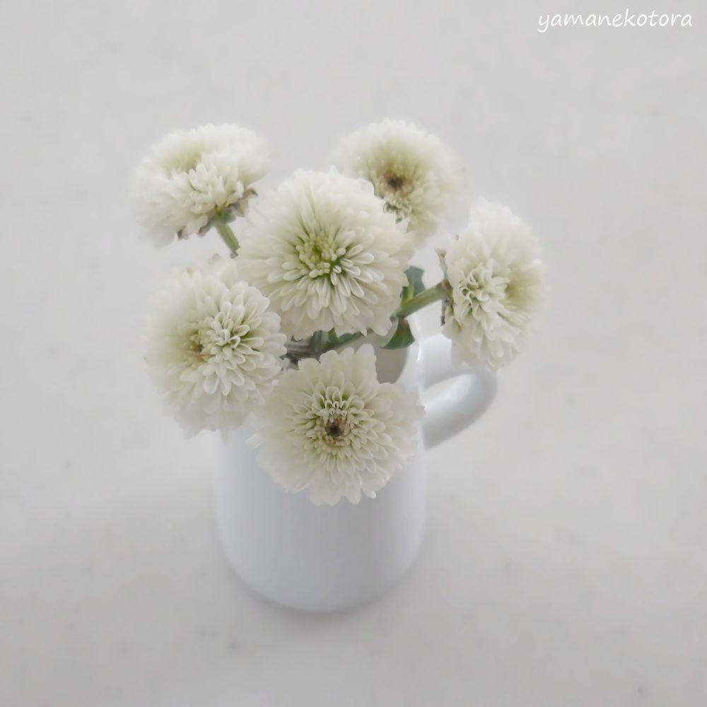 花のある暮らしを、最期まで。