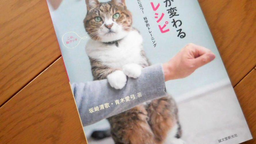 猫との暮らしが変わる遊びのレシピ