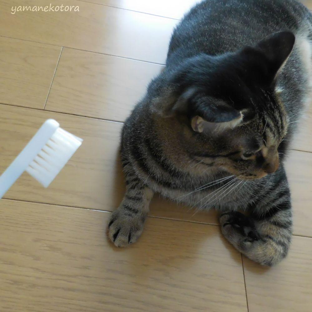 歯ブラシの新しい用途と、猫。