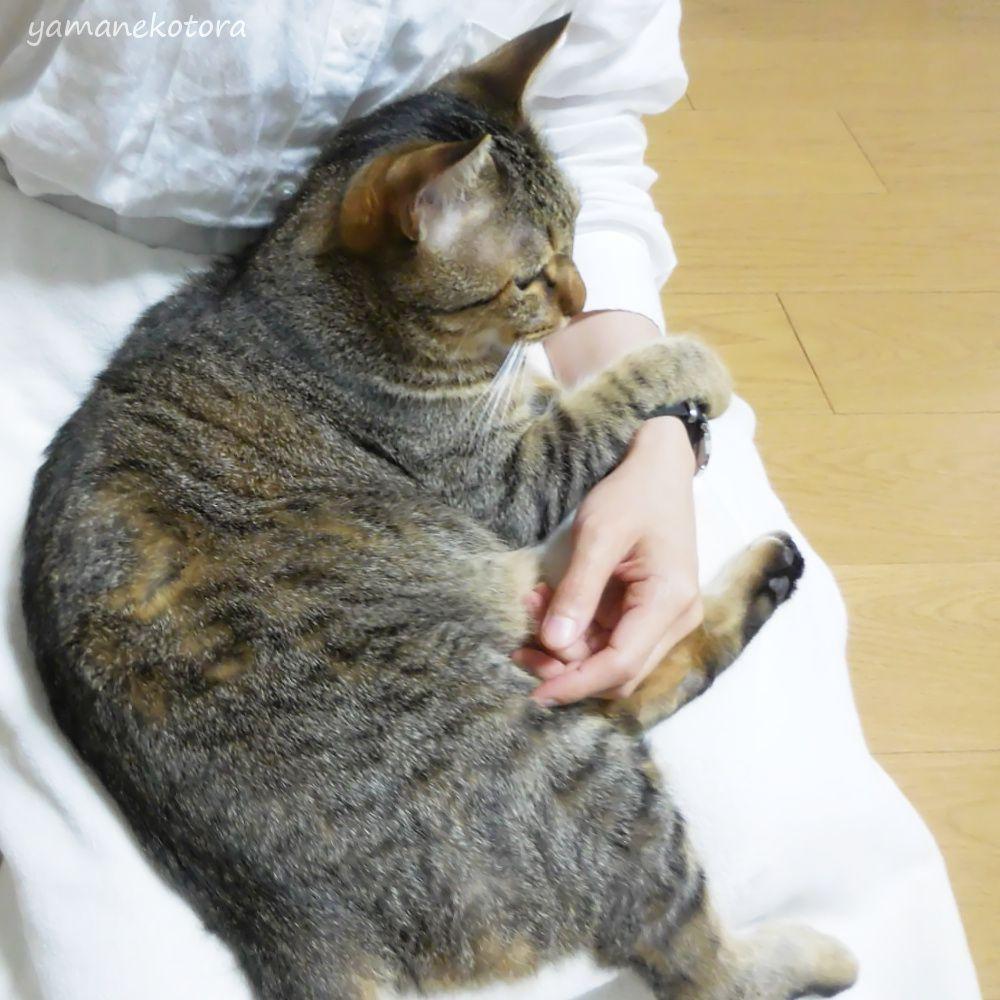 猫と見直す、暮らしの時間。