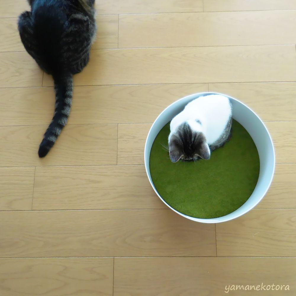 ニトリ*猫に、モチモチクッション。