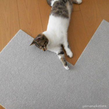 猫と暮らす部屋に、カーペットタイルの採用。
