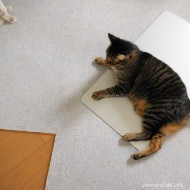 ネコ用品が、冷蔵庫掃除に活躍。