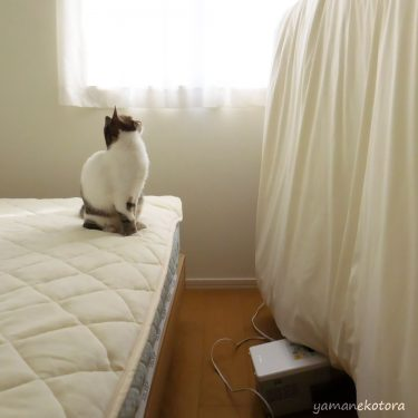 ふとん乾燥機が、使えない寝具。