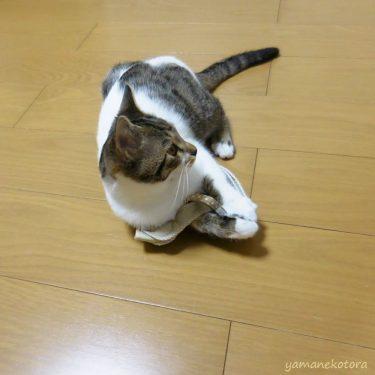 おでかけは、猫専用ハーネスで。