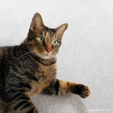 猫と暮らす年末年始、緊急時の備え。