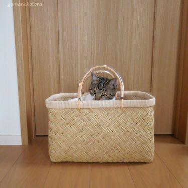 四季折々の、猫とスズ竹市場かご。