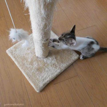 猫と暮らす、キャットタワーの注意点。