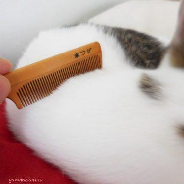 猫にも、つげ櫛。