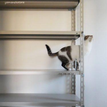 空になった本棚と、持たない猫用品。