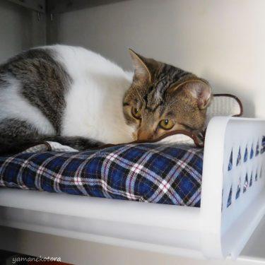 代用品でもサイズぴったりの、猫用ベッド。
