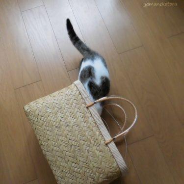 猫との暮らし、手放してよかった電気ケトル。