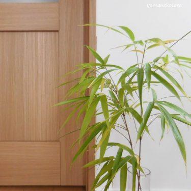真竹の冷凍保存と、七夕。