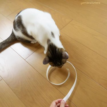 完成まで1分、猫のおもちゃを手づくり。