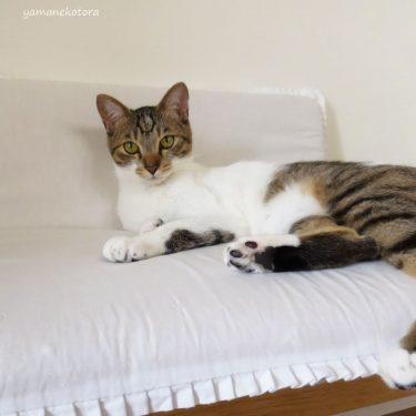 低反発にびっくり、古い寝具の再利用。