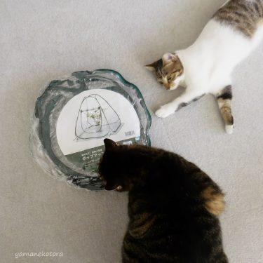 夏にも便利、猫にポップアップ温室。