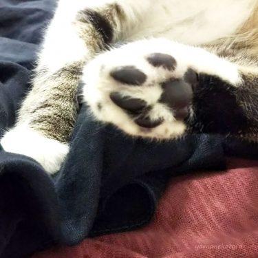 お風呂時間と、冬の猫が望むこと。
