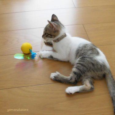 いらなくなった子猫の首輪を、再使用。