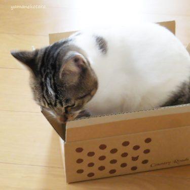 猫にもねぎらい、福の箱。