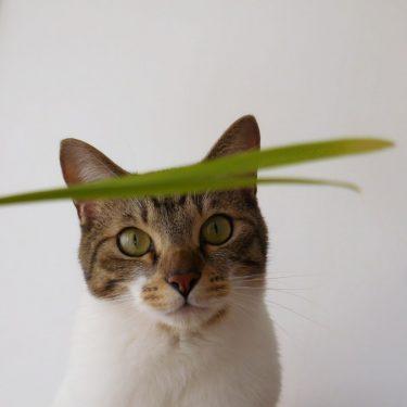 無印良品の猫草、カビ問題への対策。