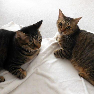 猫とヨガとわたし