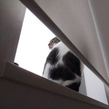 猫の安全地帯は、灯台下暗し。