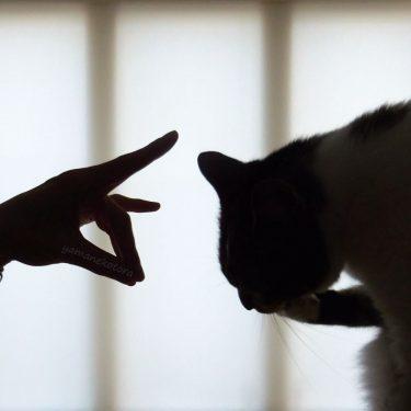 コンな、猫の日。