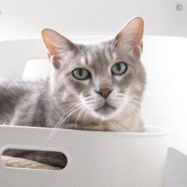 ご当地フレーバーと、食洗機のすきま。