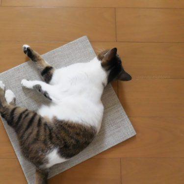 今夏は、並べて使う畳マット。